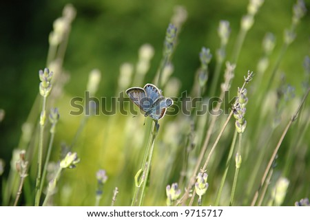 Butterfly is resting on a flower