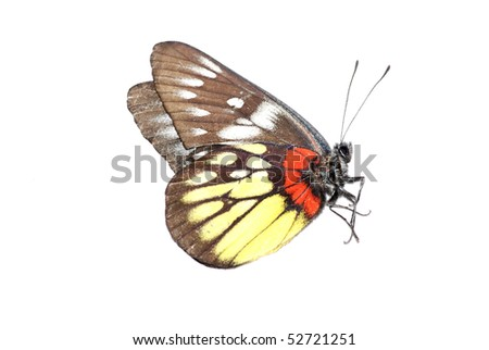 butterfly isolated in white background.