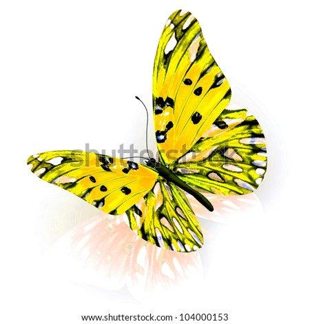 Butterfly. Isolated on white background. - stock photo