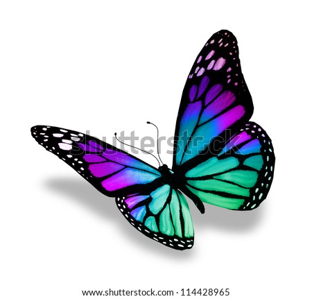 Butterfly, isolated on white background