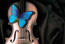 Butterfly morpho on a violin