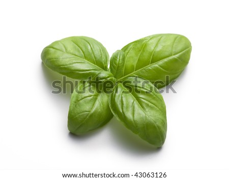 Butterfly of basil on a white background - still life - food