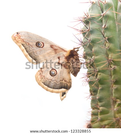 Butterfly on a cactus
