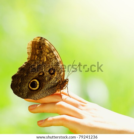 butterfly on a female hand