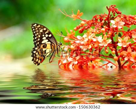 Butterfly on a flowe