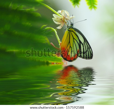 Butterfly on a flower on green background. reflected in water
