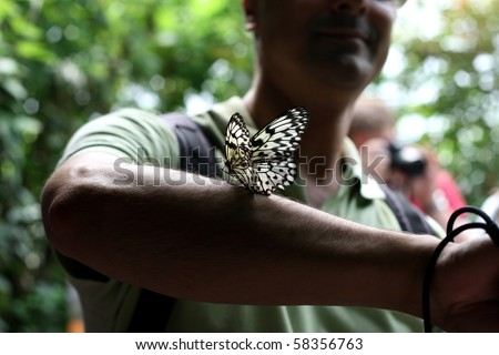 Butterfly on a man's arm at the London Zoo