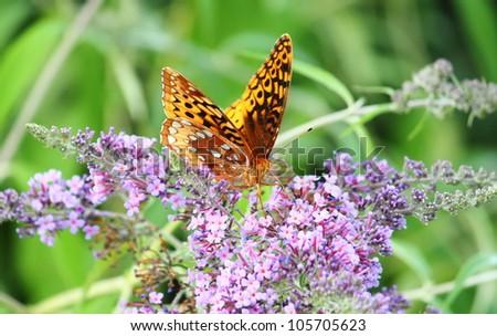 Butterfly On A Purple Flower In The Gardens Of Daniel Stowe Botanical Garden Belmont Nc Stock