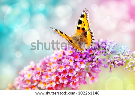 butterfly on colorful flower and bokeh light effect background
