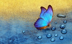 butterfly on dew drops. gold and blue background. watercolor paper painted in blue and gold paint. bright morpho butterfly on a blue and gold background. copy space