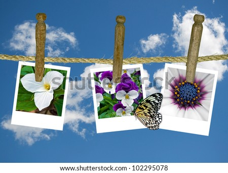 butterfly on floral photo hanging on clothesline - stock photo