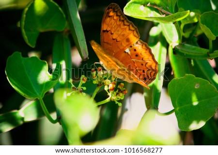 butterfly on flower  #1016568277