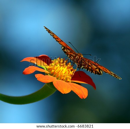 Butterfly on flower