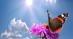 butterfly on flower against blue cloudy sky with sun