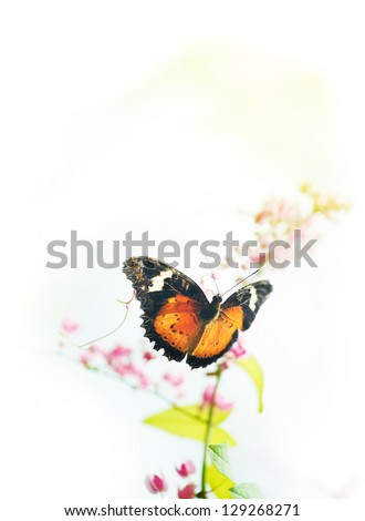 Butterfly on flower with copy space on top.
