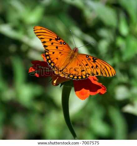 Butterfly on flower with wings spread - stock photo