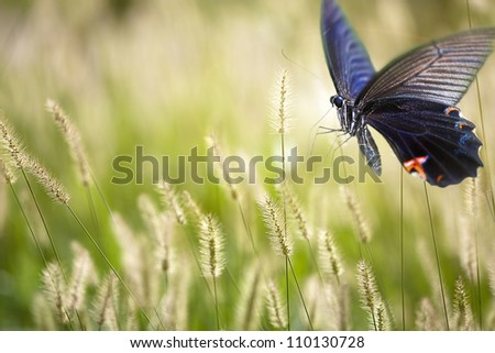 butterfly on flowers for adv or other purpose use