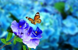Butterfly on flowers with blue blurry background. This photo contains a beautiful butterfly with wings sitting on flowers. A nice cute nature photo of Butterfly flower. Butterfly Flower. Wings insect.