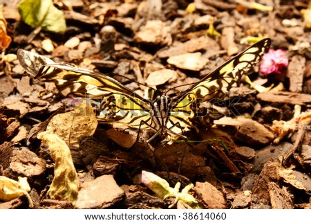 Butterfly on ground. - stock photo