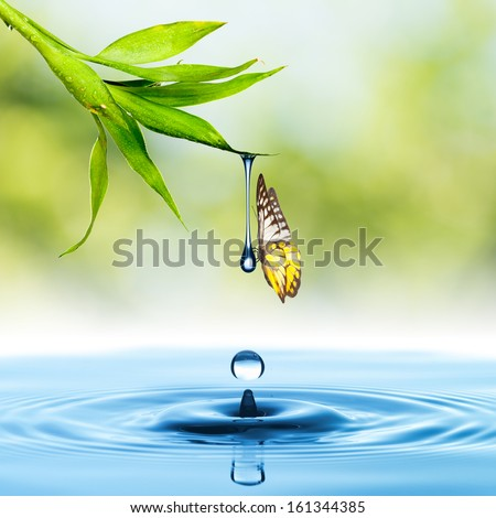 Butterfly on leaf and water drop