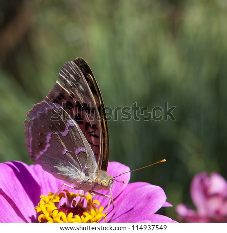 Butterfly on lilac daisy flowers over green defocused natural background in sunny day. Selective focus. Postcard