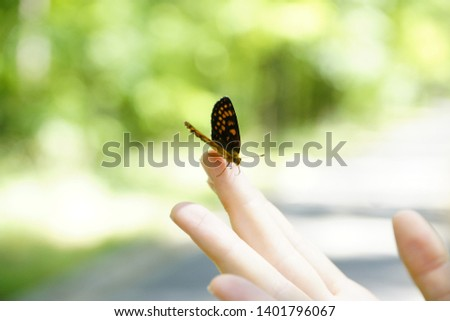 butterfly on mobile picture in nature