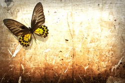 Butterfly on vintage grunge wall background