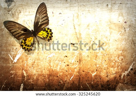 Butterfly on vintage grunge wall background #325245620