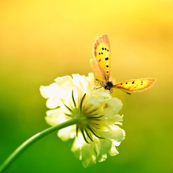 Butterfly on white flower
