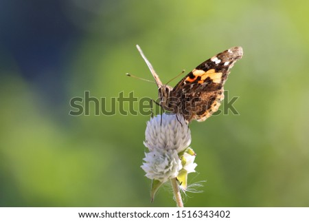 Butterfly. one of the most important thing is that what you need to know in our lives life..