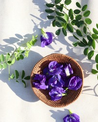 Butterfly pea flower or Bunga Telang or blue pea, bluebellvine , cordofan pea, clitoria ternatea in rattan basket. Taken from top view.