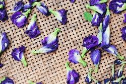 Butterfly pea flowers for dry on wooden background / bluebellvine, blue pea, cordofan pea (Clitoria ternatea)