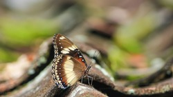 Butterfly perched on the tiled roof