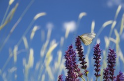 Butterfly perching on a purple wild flower in a natural meadow on a sunny summer day.