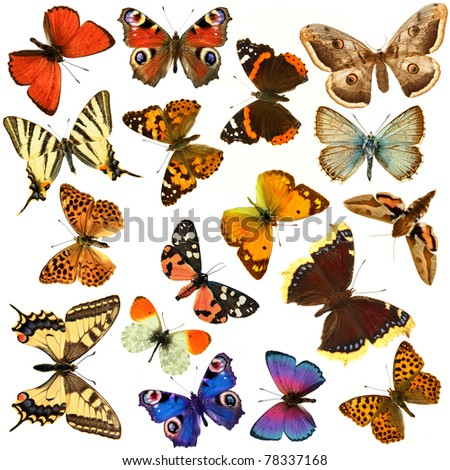 Butterfly's, in the white background