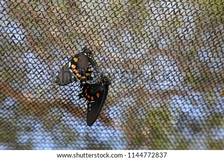 How do butterflies have sex — photo 8