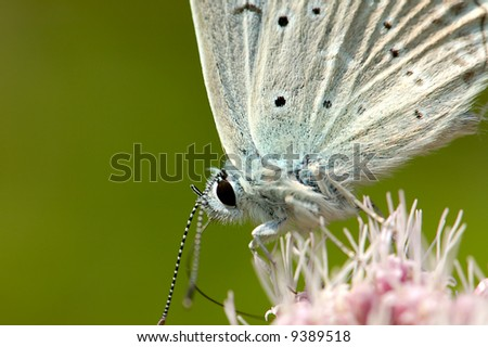 butterfly's portrait on the flower isolated