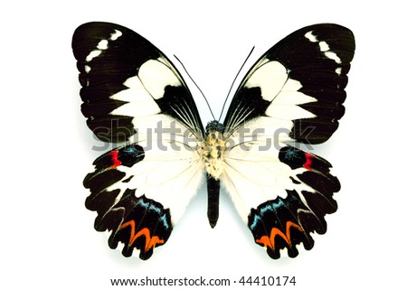 Butterfly series - Rare Beautiful Butterfly isolated on white background