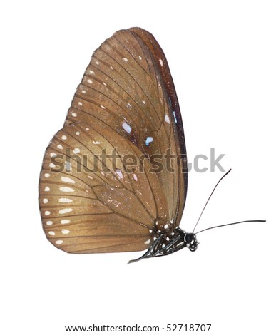 butterfly set isolated in white background.