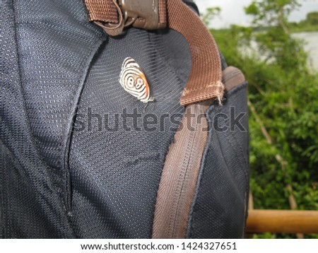 Butterfly showing the number 88, on a backpack
