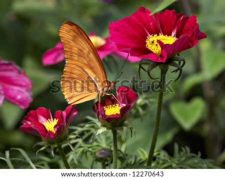 Butterfly sitting on a flower garden - stock photo