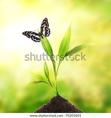 Butterfly sitting on a young plant