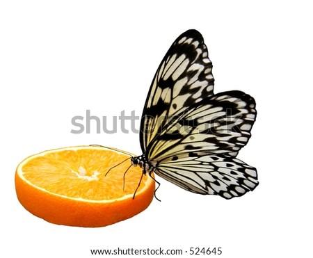 Butterfly sitting on an orange slice