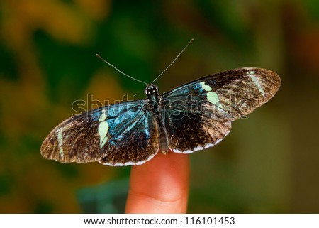 Butterfly sitting on finger, natural background