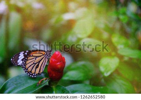 Butterfly sitting on green leaves  beautiful insect in the nature habitat