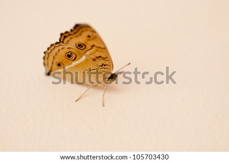 butterfly sitting on the floor