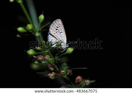 Free Photos Butterfly In Natural Sleep At Night Avopixcom