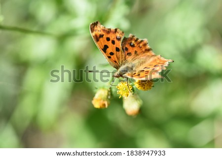 Photo of  Butterfly sucking nectar / Autumn natural background material.