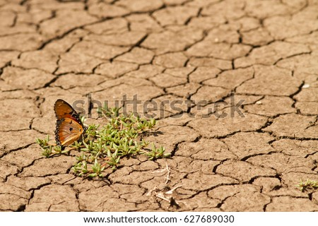 Butterfly surviving a drought #627689030