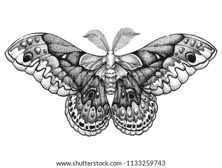 Butterfly tattoo art. Hyalophora cecropia. Cecropia moth. Dotwork tattoo. Mystical symbol of freedom, nature, beauty, perfection. North America's largest native moth